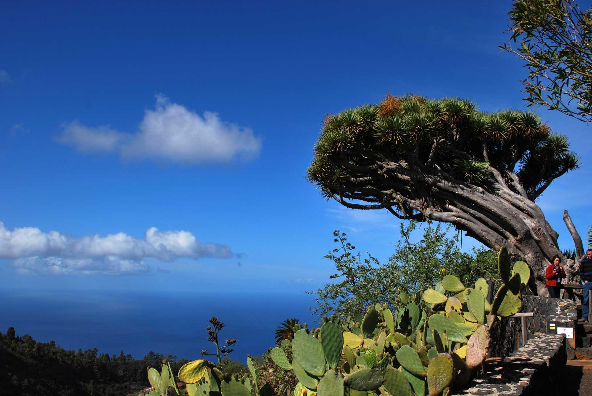 Lbum De Fotos Y Gu A De Viaje De Puntagorda De Angel